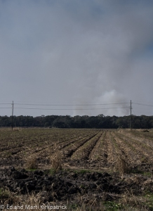 Smoke from burning cane on the horizon and burned chaff in the foreground. Note the new cane growing.