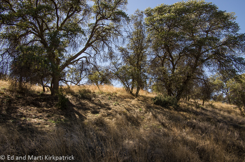 Picnic spot at the end of Box Canyon Road