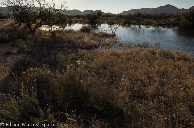 Oak Flats Pond 1