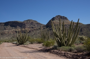 Organ Pipe Road