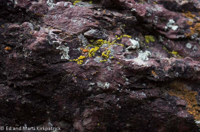 Lichens Natural Bridge