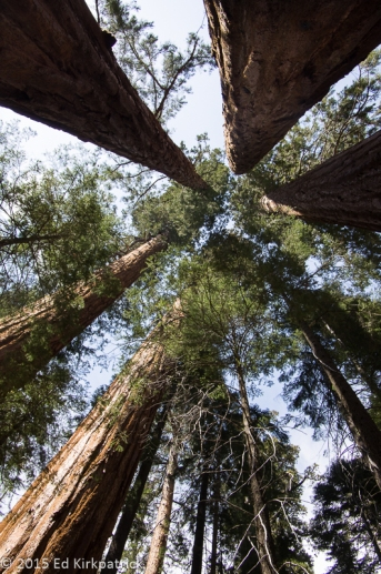 Trail of 100 Giants - Sequoia National Forest