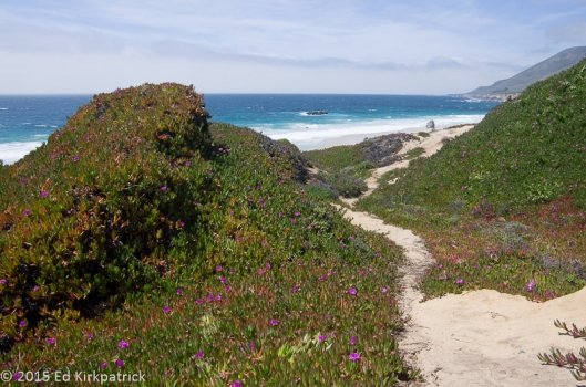 Ice Plants and other wildflowers flourish in the cool moist air.