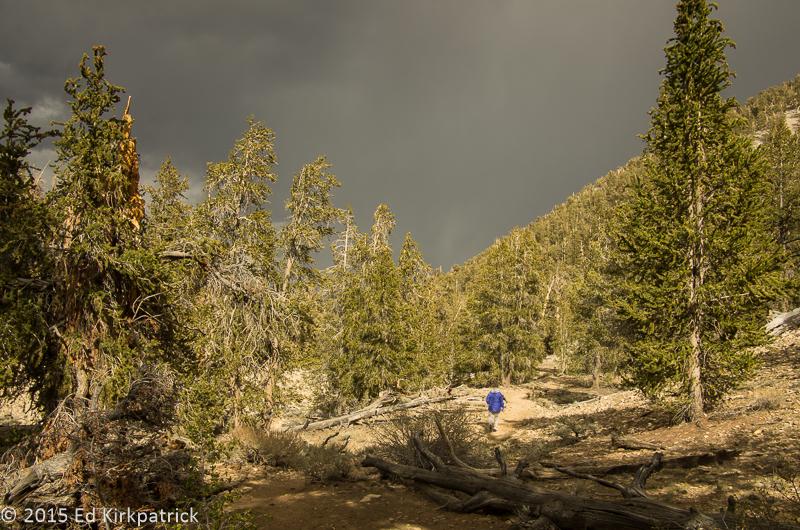 Schulman Grove Bristlecone Pine Forest