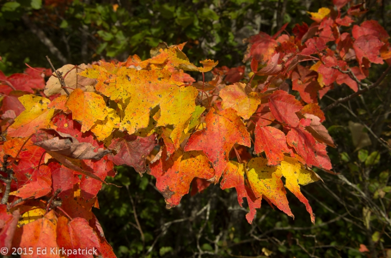 A riot of fall colors