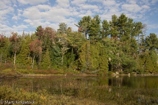 Horseshoe Lake in Alliston Ontario with a Blue Heron....