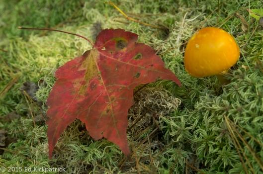 Leaf and Fungus